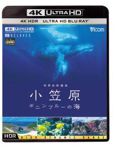 小笠原ボニンブルーの海 水中撮影|ジール撮影事業部
